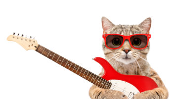 Cat in sunglasses with electric guitar isolated on white background