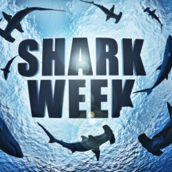 School of sharks , great white and hammerhead's circling the text Shark week with a shark bite taken out of the k. 3d rendering